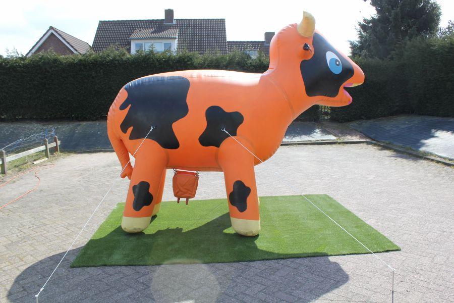 Ranja koe is voor ieder evenement geschikt.Nu goedkoop huren bij Attractieverhuur de Toren.